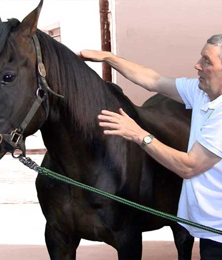 Advanced Bio-energy animal healing helped  to heal an injured horse